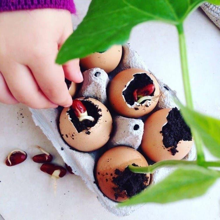 10 usos que no conocías de las cáscaras de huevos   Contexto Tucumán