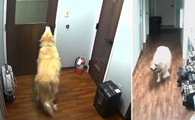 Video viral: el gran escape de un perro