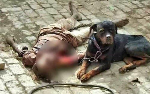 Rottweiler mata a su dueño y mastica parte de su cuerpo