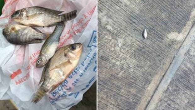 Llovieron peces en Tampico — INCREÍBLE