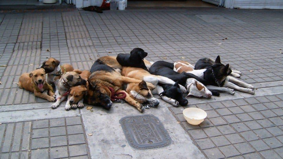 Proponen instalar frigoríficos para comercializar carne de perros — Polémica
