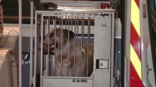 Granjero mata un perro e invita a su dueño a comérselo