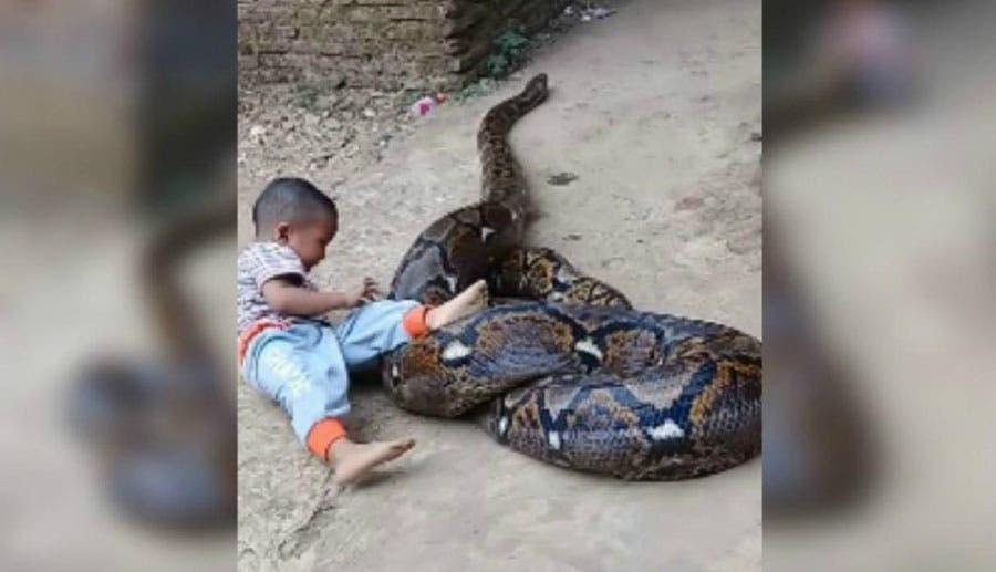 Menor juega con serpiente pitón mientras sus padres lo graban