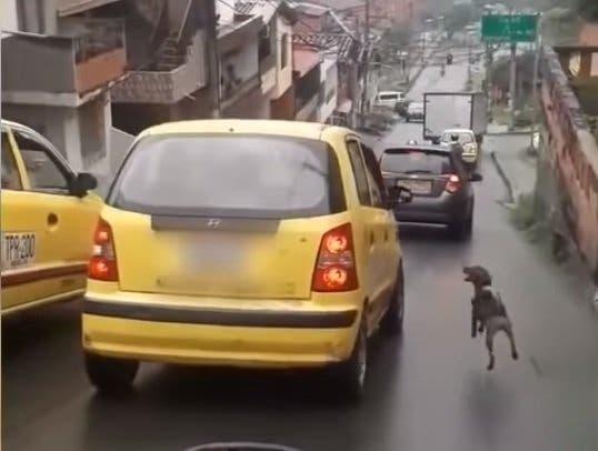 Abandonan a perro; corre 20 cuadras para alcanza a sus dueños