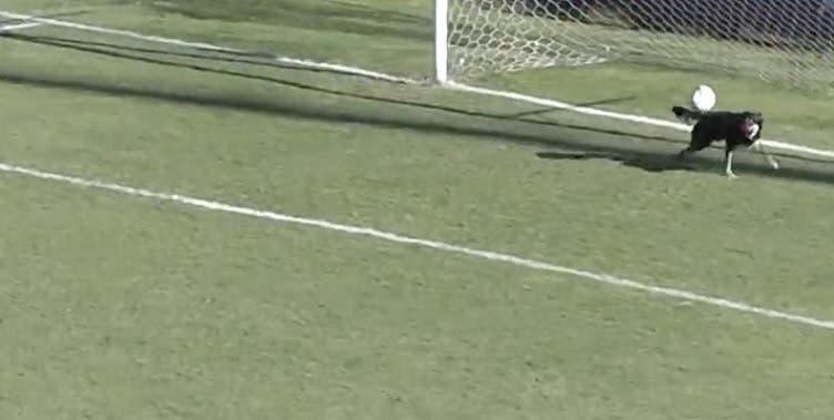 Perro ataja un gol cantado en partido de fútbol en Argentina