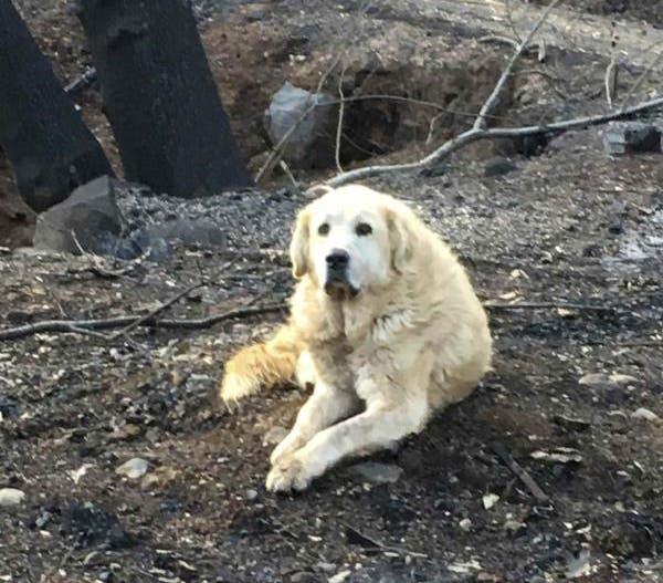 Perrito espera a sus dueños más de 1 mes en casa quemada