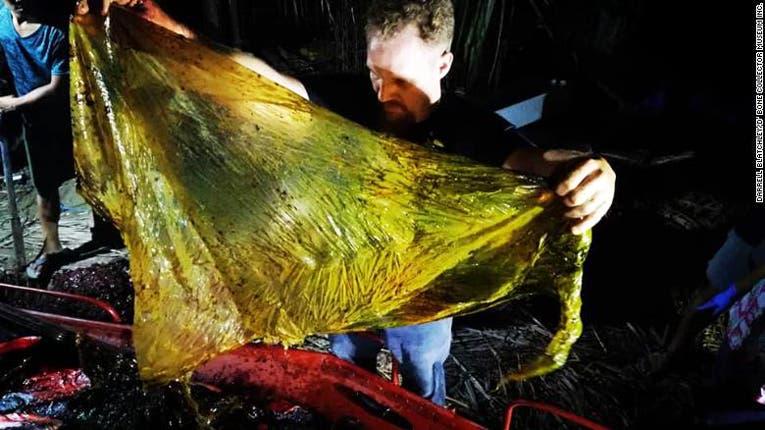 Cuarenta kilos de plástico encontrados dentro de una ballena muerta en Filipinas
