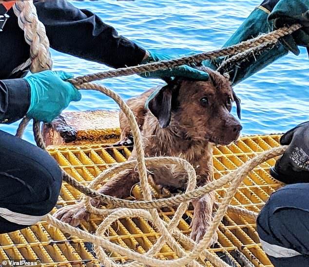 Rescataron a un perrito en una plataforma petrolera 200 kilómetros mar adentro