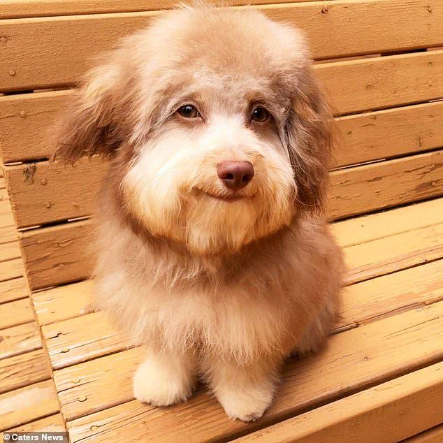 Nori, el perro que asombra por su rostro humano
