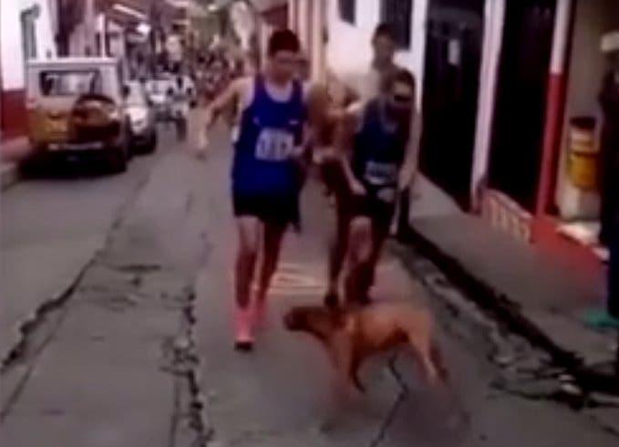 Corredor patea a perro durante carrera; recibe dura sanción
