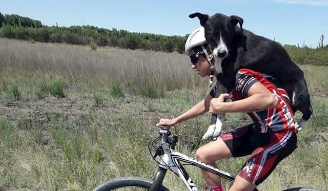 Ciclistas rescataron a un perro — La Rioja
