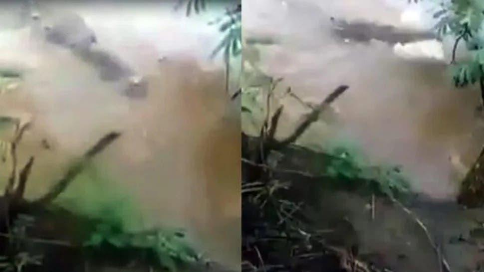 Indignación en Panamá jóvenes arrojaron perrita a cocodrilo