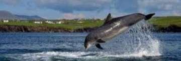 Prefectura patrulla el Canal Beagle acompañada de delfines ...