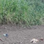 Un carpintero colombiano decapitado en lo que se cree fue una venganza