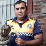 El bombero que atrapa víboras con las manos rescató una boa en Barrio Sur