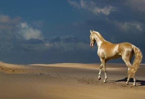 """Resultado de imagen para Este es el """"caballo venido del cielo"""""""
